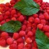 рецепт малинового варенья - ягода