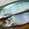 закуска из сельди - рыба