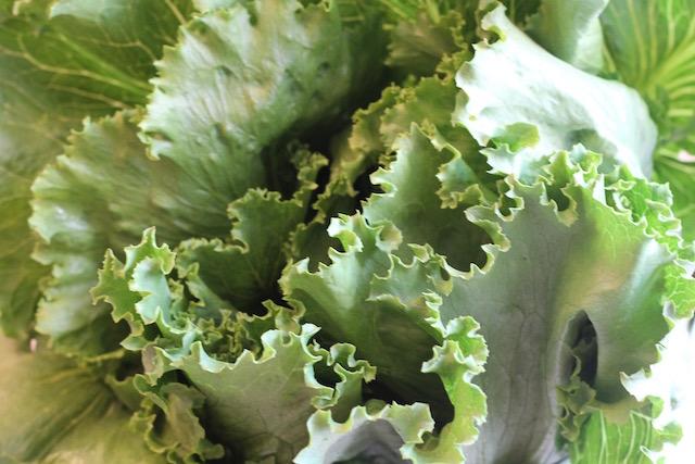 летние закуски с салатом - буйство салата