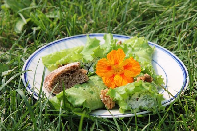 летние закуски с салатом - завтрак на траве